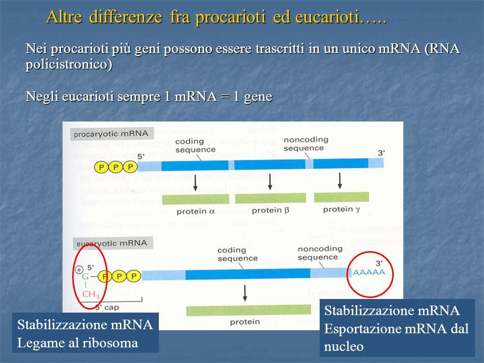 Altre differenze fra procarioti ed eucarioti…..