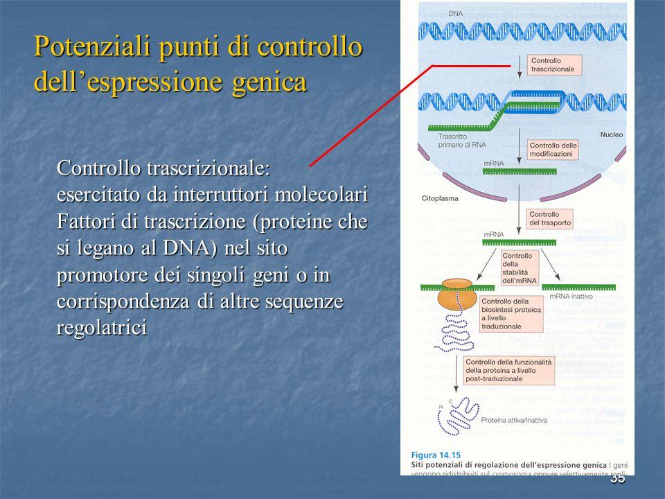 Potenziali punti di controllo dell'espressione genica