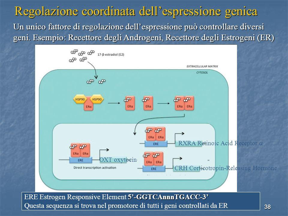 Regolazione coordinata dell'espressione genica