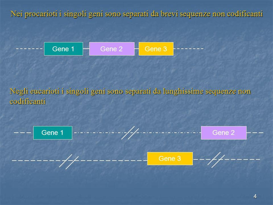 Nei procarioti i singoli geni sono separati da brevi sequenze non codificanti