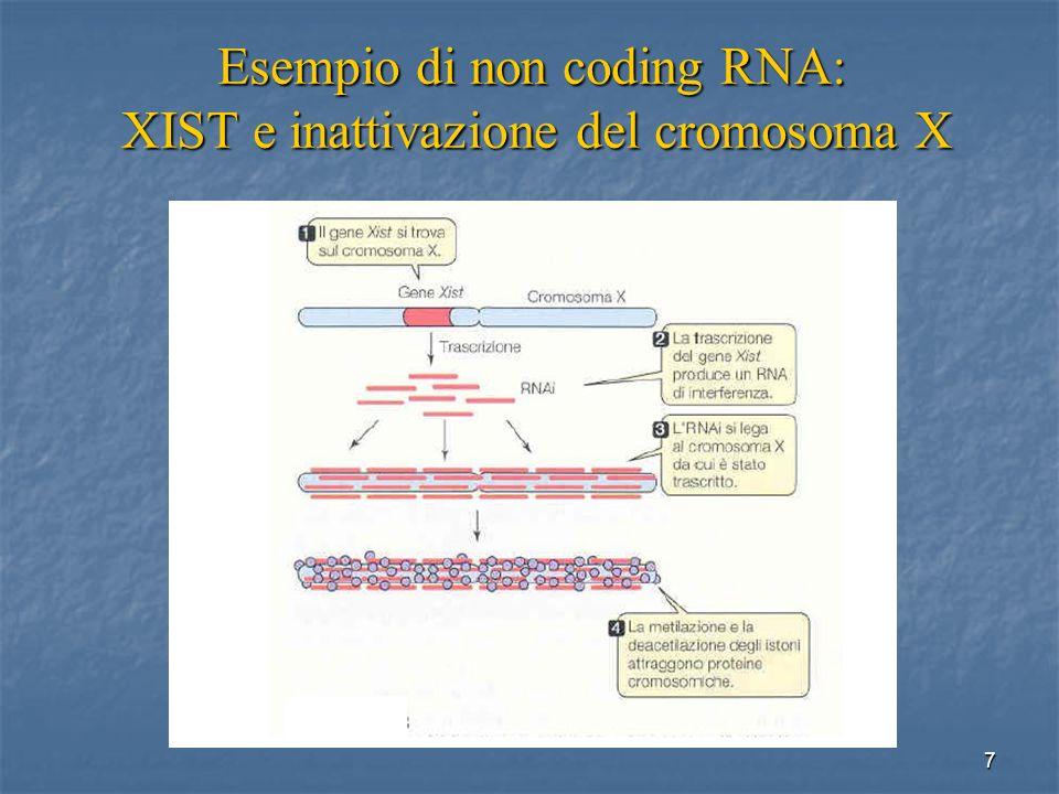Esempio di non coding RNA: XIST e inattivazione del cromosoma X