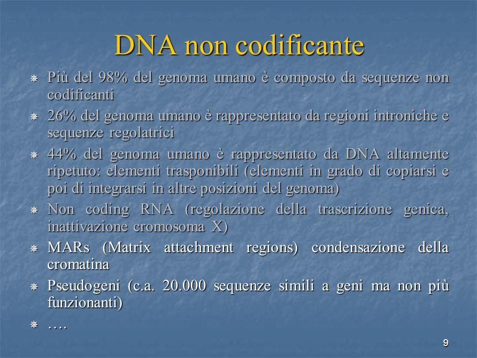 DNA non codificante Più del 98% del genoma umano è composto da sequenze non codificanti.