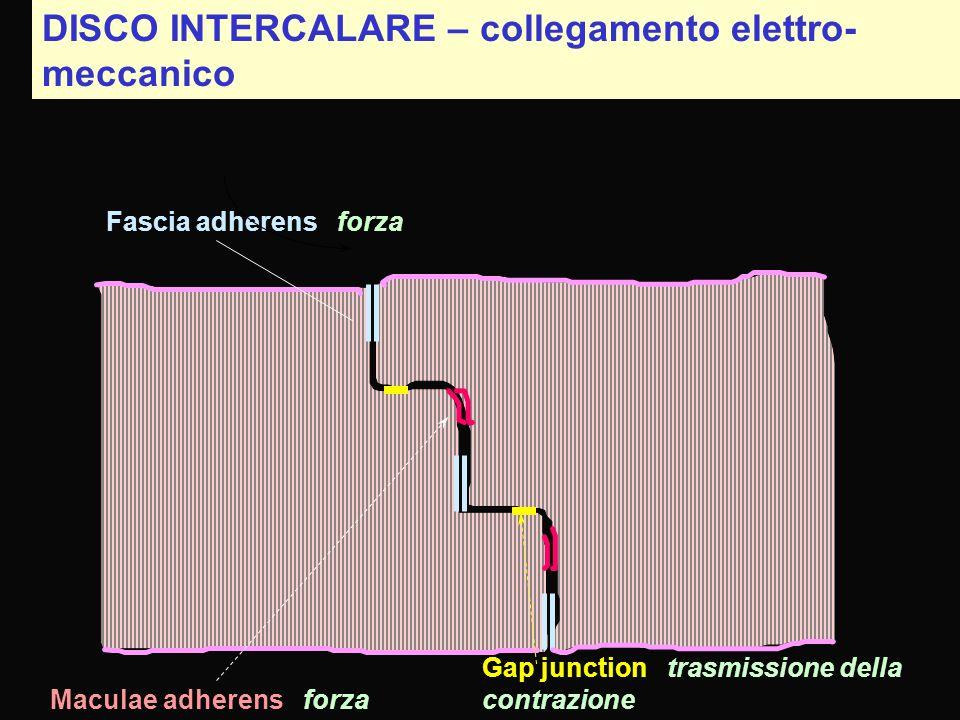 DISCO INTERCALARE – collegamento elettro-meccanico