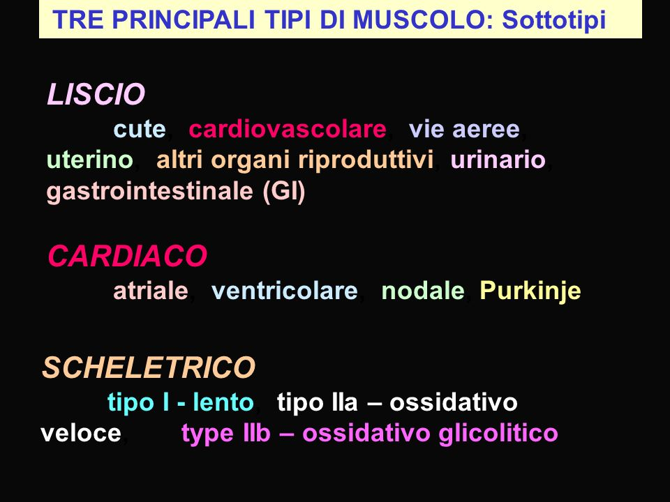 CARDIACO atriale, ventricolare, nodale, Purkinje
