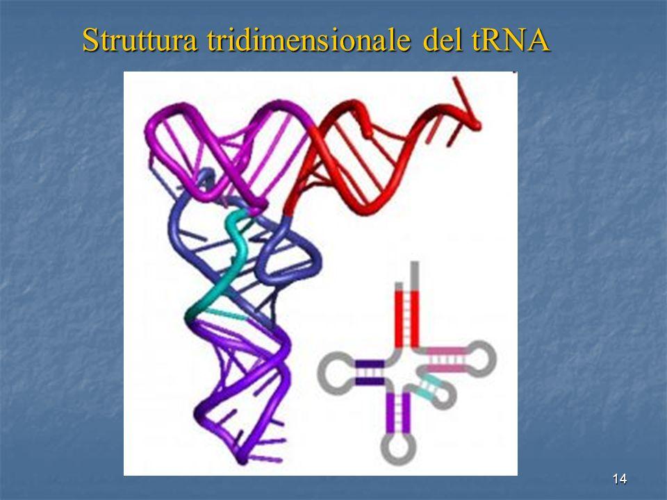 Struttura tridimensionale del tRNA