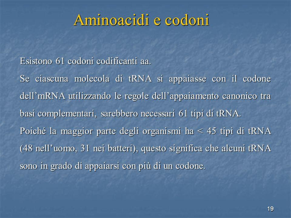 Aminoacidi e codoni Esistono 61 codoni codificanti aa.