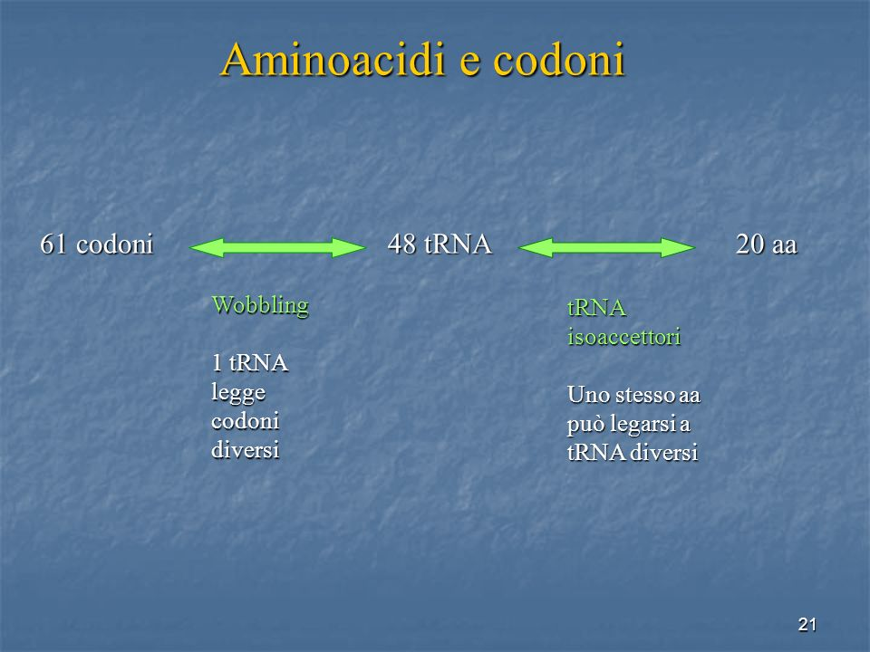 Aminoacidi e codoni 61 codoni 48 tRNA 20 aa Wobbling tRNA isoaccettori