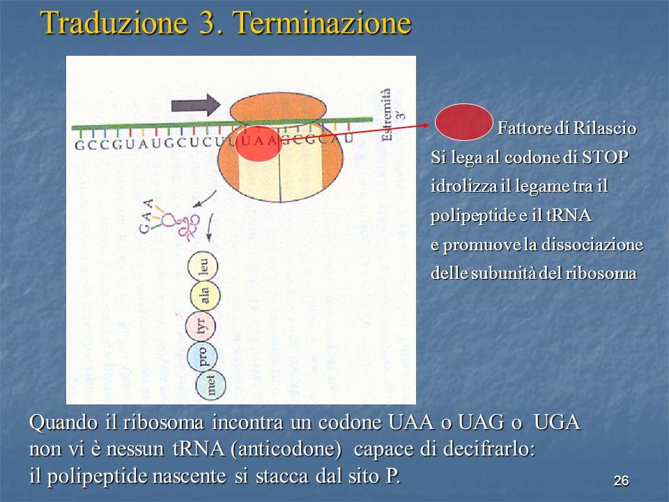 Traduzione 3. Terminazione