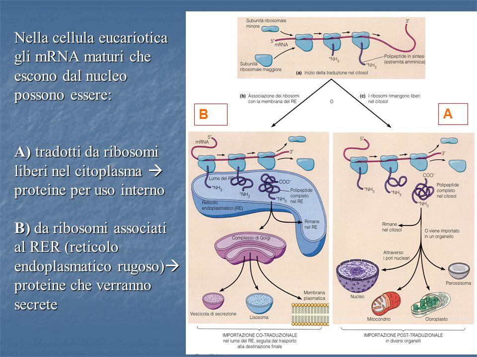 Nella cellula eucariotica