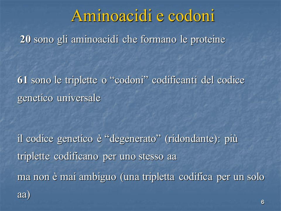 Aminoacidi e codoni 20 sono gli aminoacidi che formano le proteine