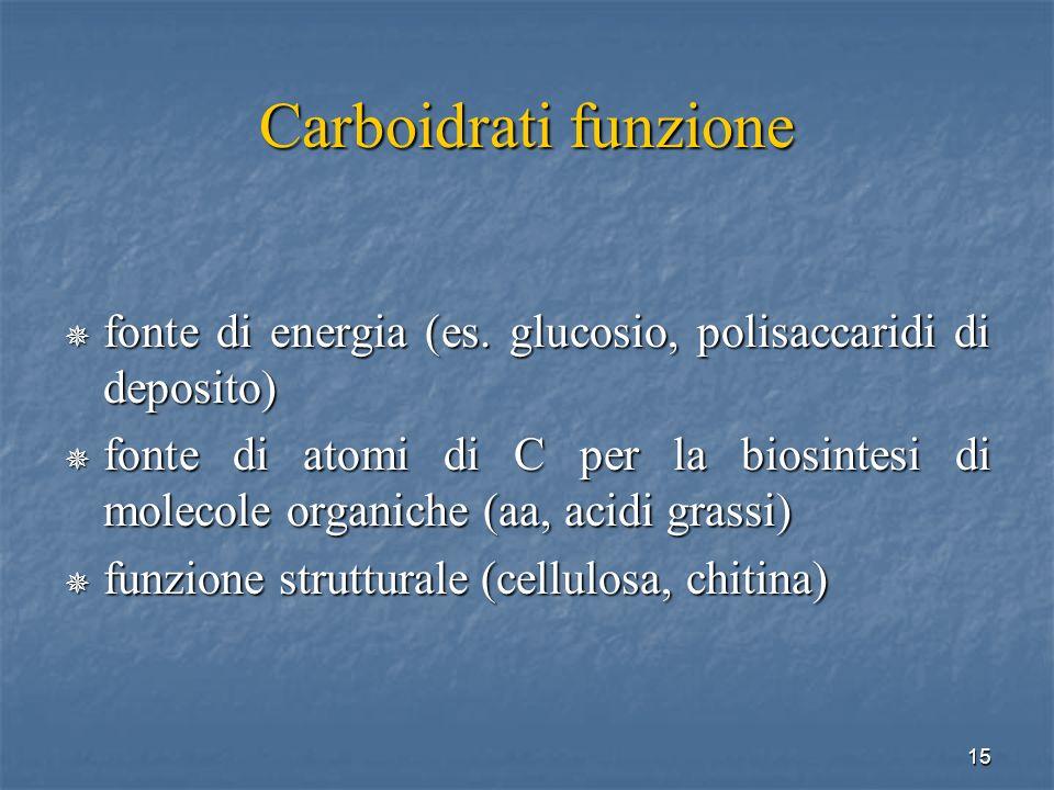Carboidrati funzione fonte di energia (es. glucosio, polisaccaridi di deposito)