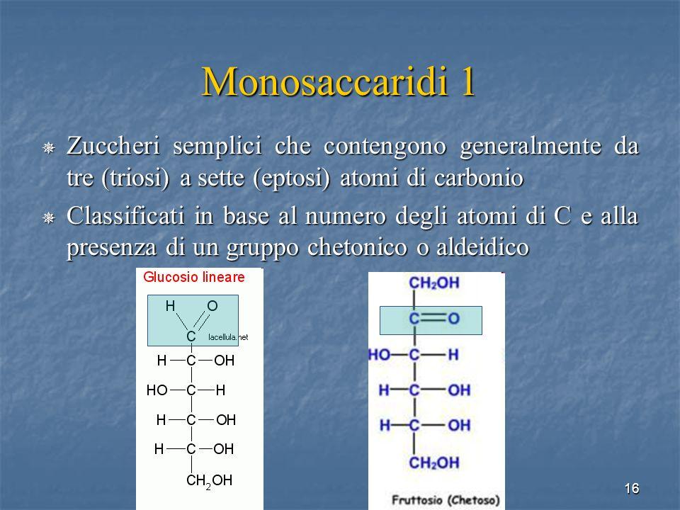 Monosaccaridi 1 Zuccheri semplici che contengono generalmente da tre (triosi) a sette (eptosi) atomi di carbonio.