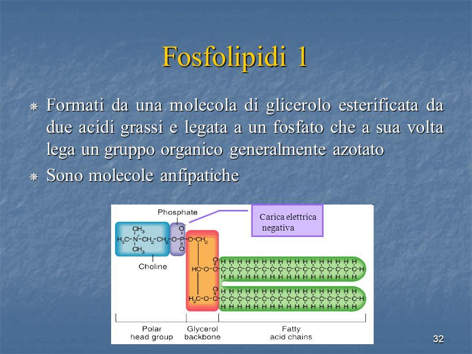 Fosfolipidi 1