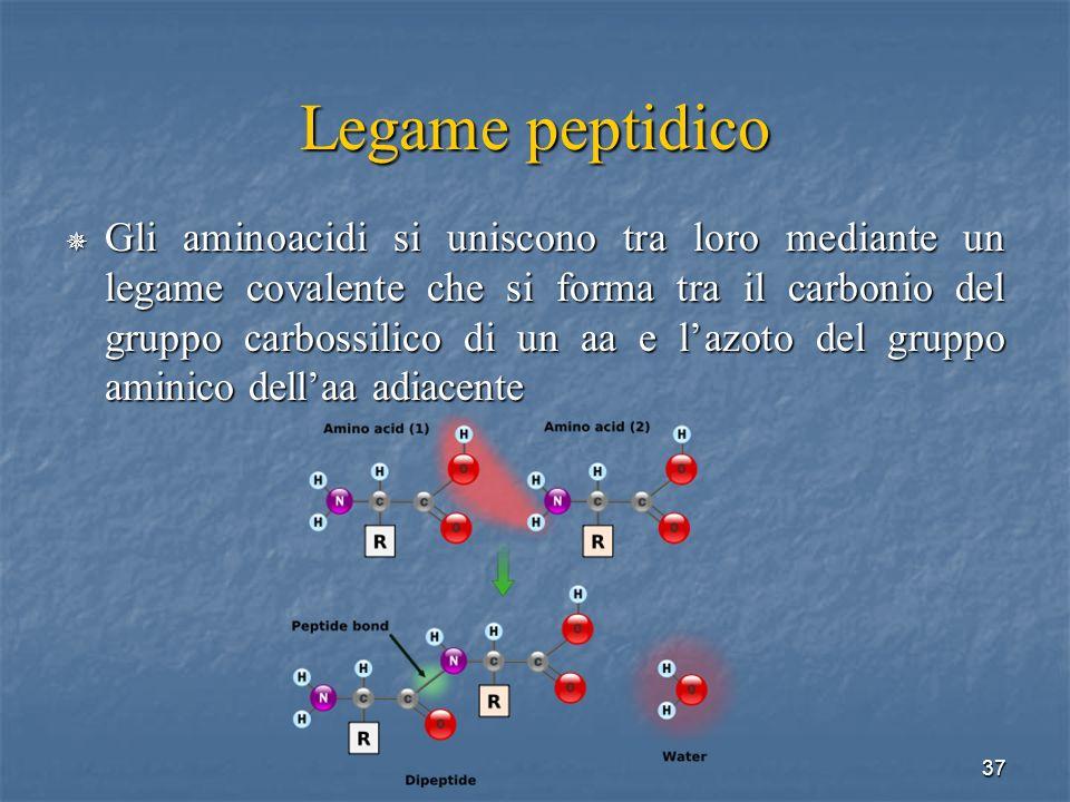 Legame peptidico