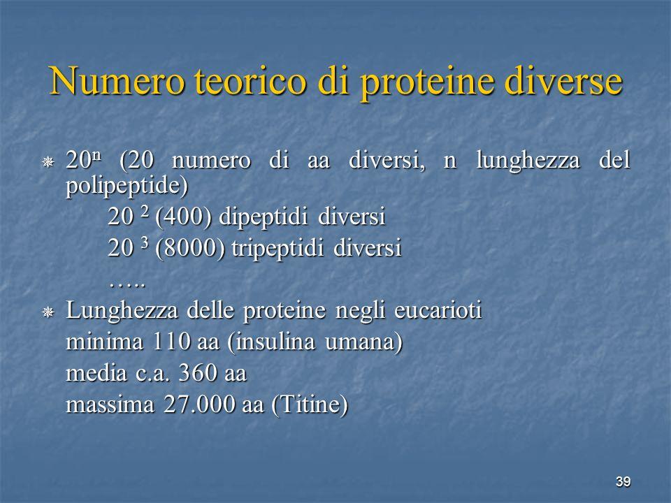 Numero teorico di proteine diverse