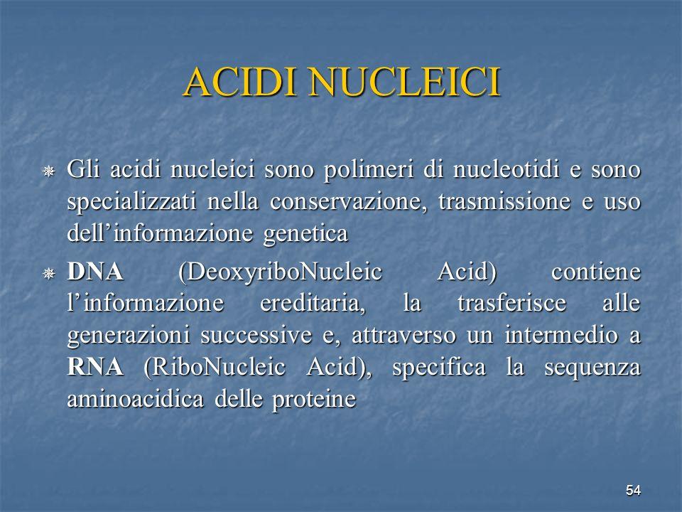 ACIDI NUCLEICI Gli acidi nucleici sono polimeri di nucleotidi e sono specializzati nella conservazione, trasmissione e uso dell'informazione genetica.