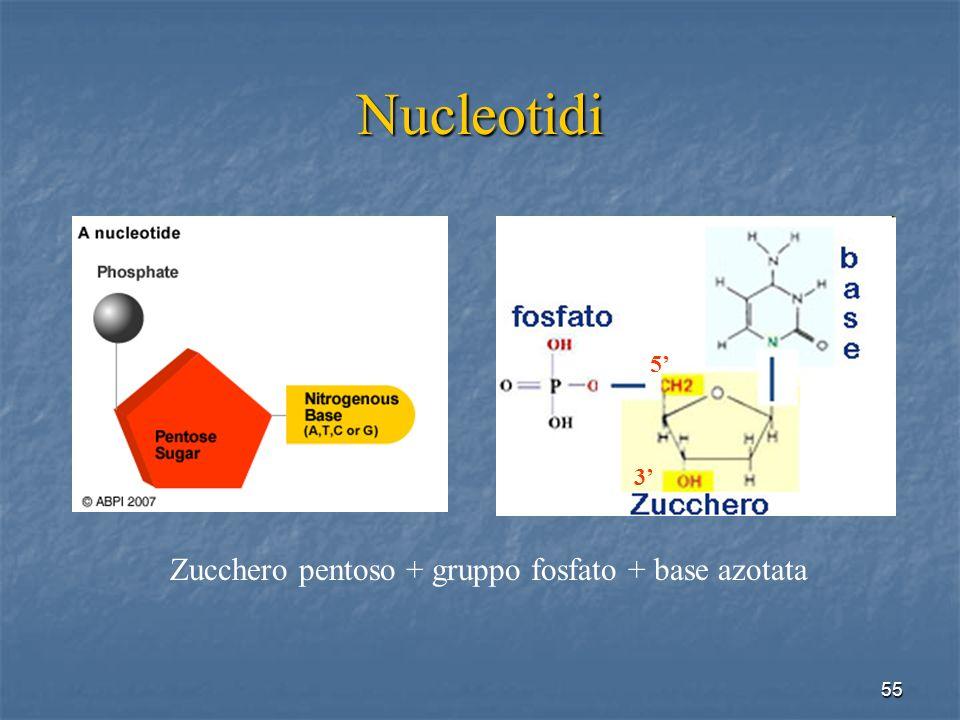 Nucleotidi Zucchero pentoso + gruppo fosfato + base azotata 5' 3'