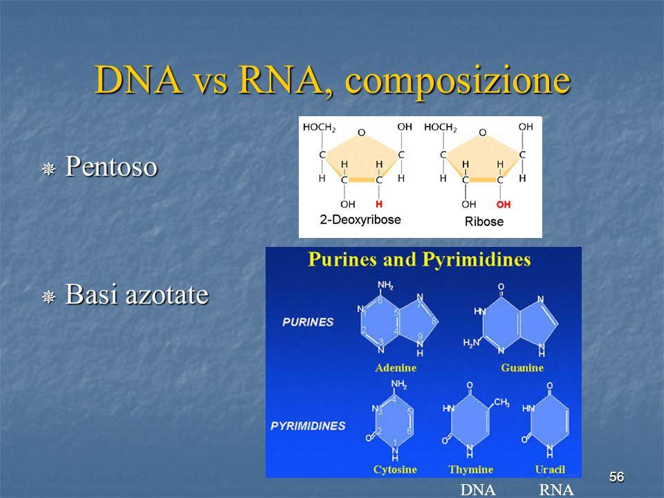 DNA vs RNA, composizione