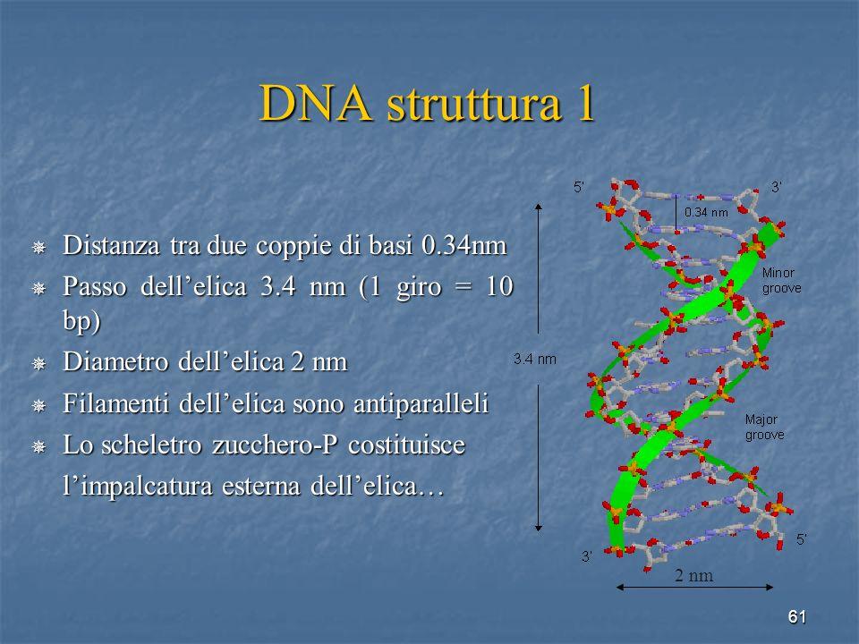 DNA struttura 1 Distanza tra due coppie di basi 0.34nm