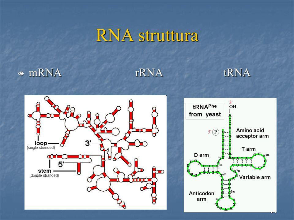 RNA struttura mRNA rRNA tRNA