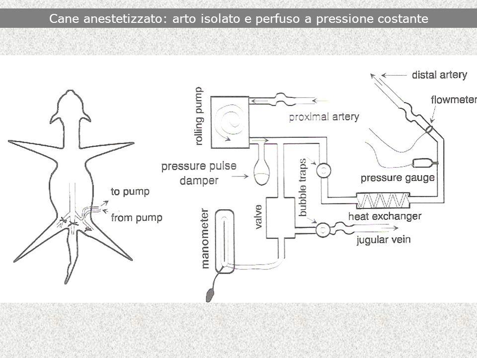 Cane anestetizzato: arto isolato e perfuso a pressione costante