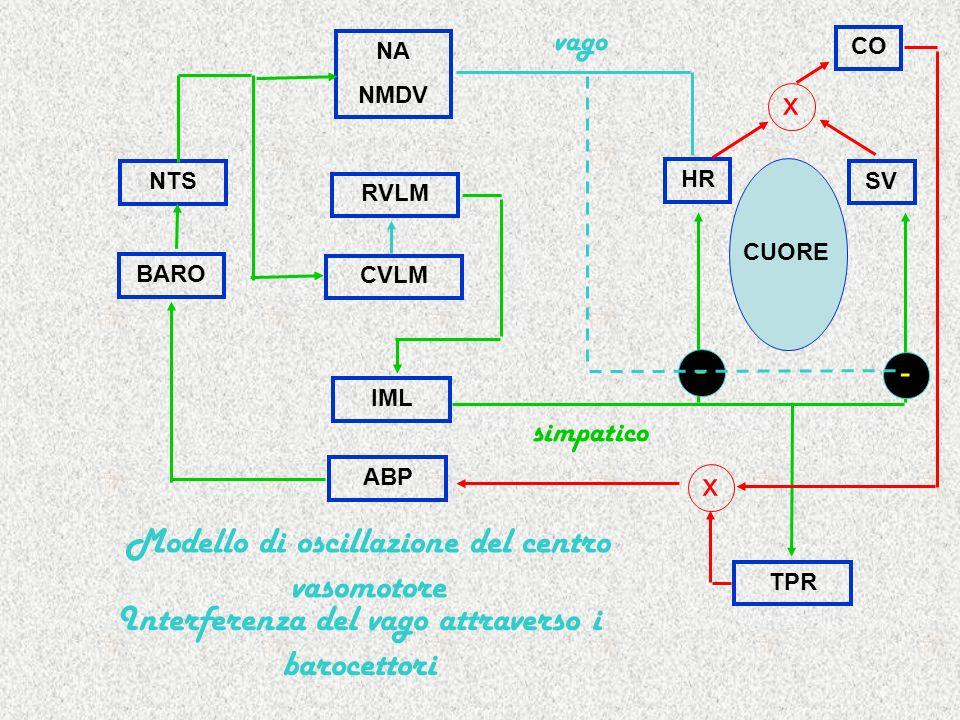 Modello di oscillazione del centro vasomotore