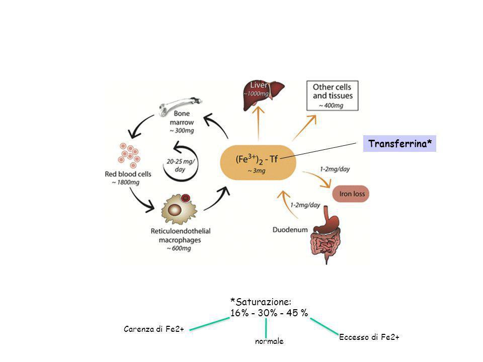 Transferrina* *Saturazione: 16% - 30% - 45 % Carenza di Fe2+