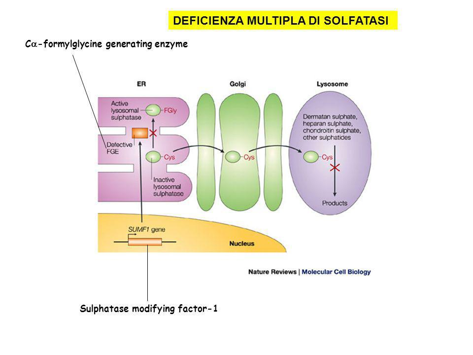 DEFICIENZA MULTIPLA DI SOLFATASI