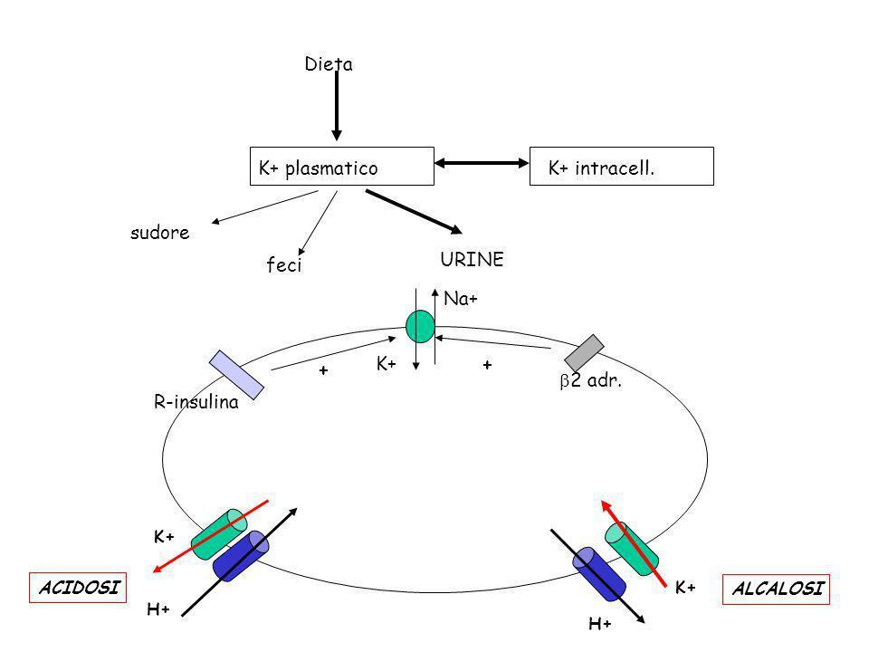 Dieta K+ plasmatico K+ intracell. sudore feci URINE K+ b2 adr.