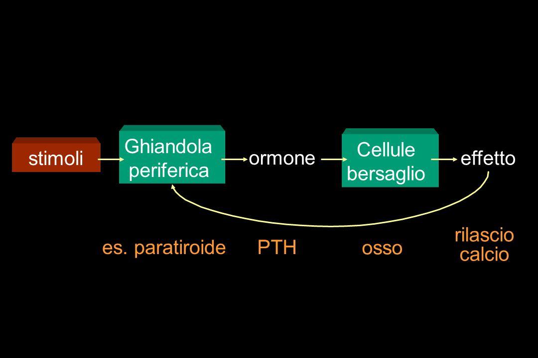 Ghiandola periferica Cellule bersaglio stimoli ormone effetto