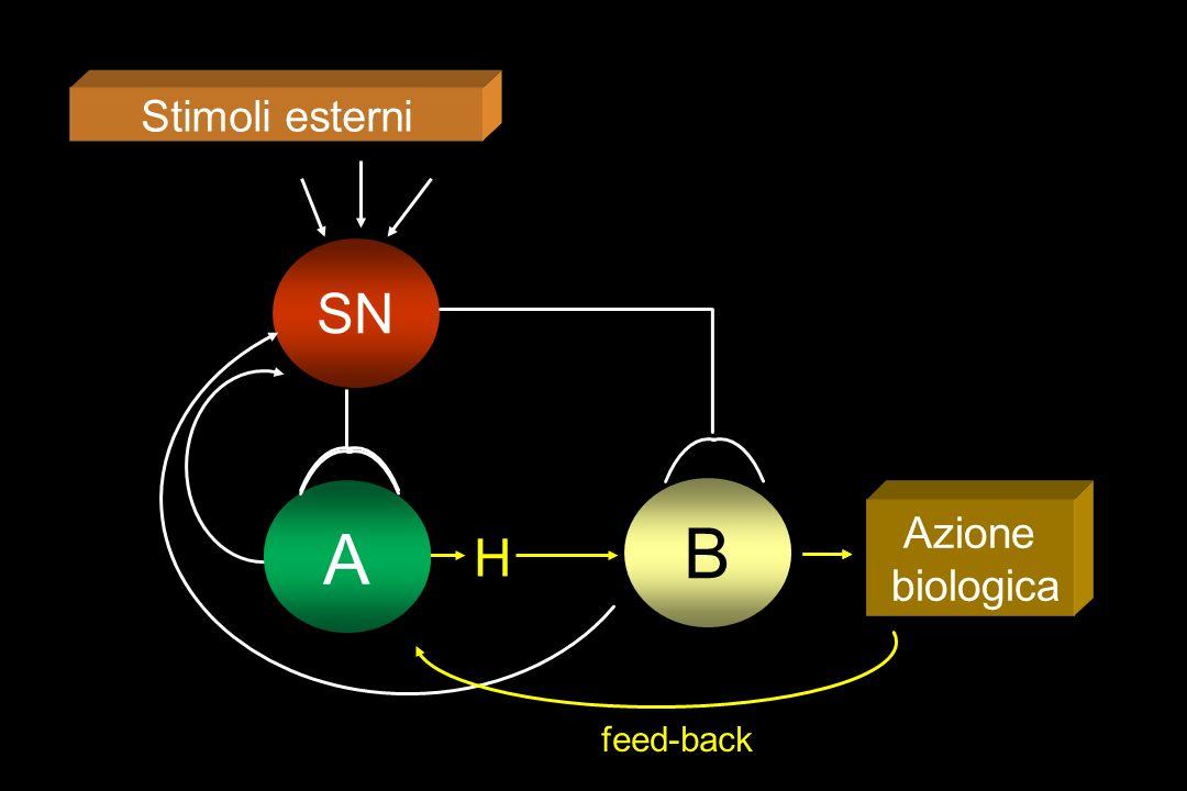 Stimoli esterni SN A A B Azione biologica H feed-back 3
