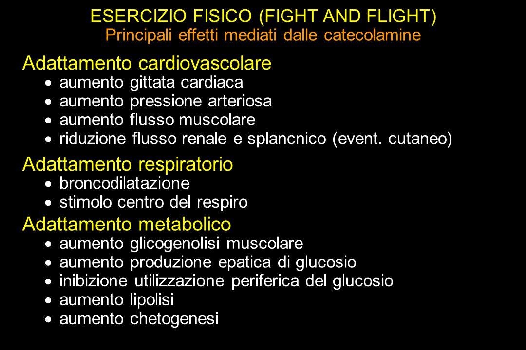 Adattamento cardiovascolare
