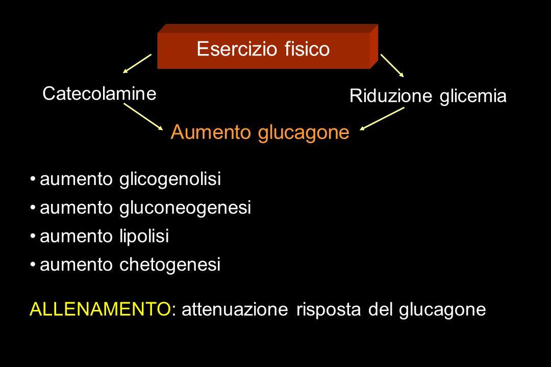 Esercizio fisico Aumento glucagone Catecolamine Riduzione glicemia