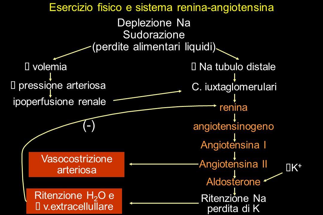 (-) Esercizio fisico e sistema renina-angiotensina Deplezione Na