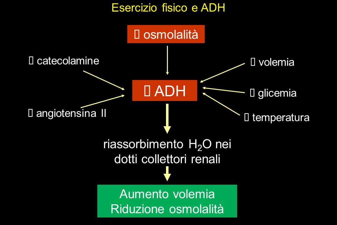riassorbimento H2O nei dotti collettori renali
