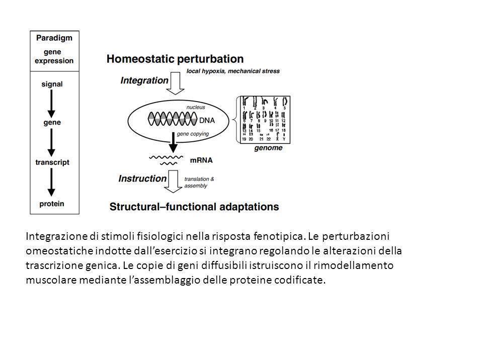 Integrazione di stimoli fisiologici nella risposta fenotipica