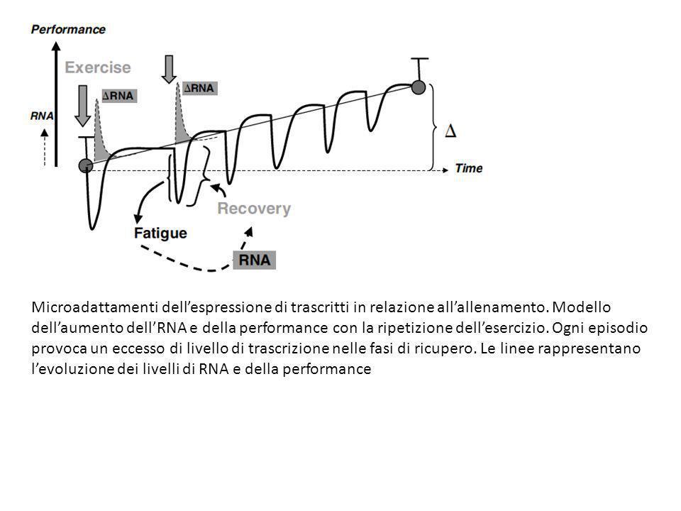 Microadattamenti dell'espressione di trascritti in relazione all'allenamento.