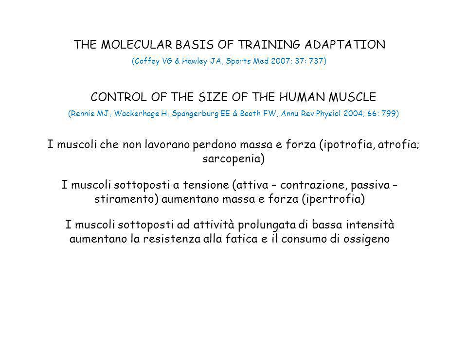 THE MOLECULAR BASIS OF TRAINING ADAPTATION