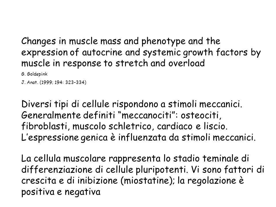 Changes in muscle mass and phenotype and the expression of autocrine and systemic growth factors by muscle in response to stretch and overload