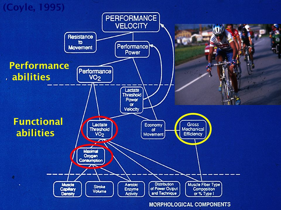 (Coyle, 1995) Performance abilities Functional abilities