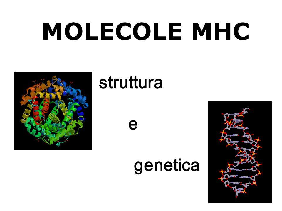 MOLECOLE MHC struttura e genetica