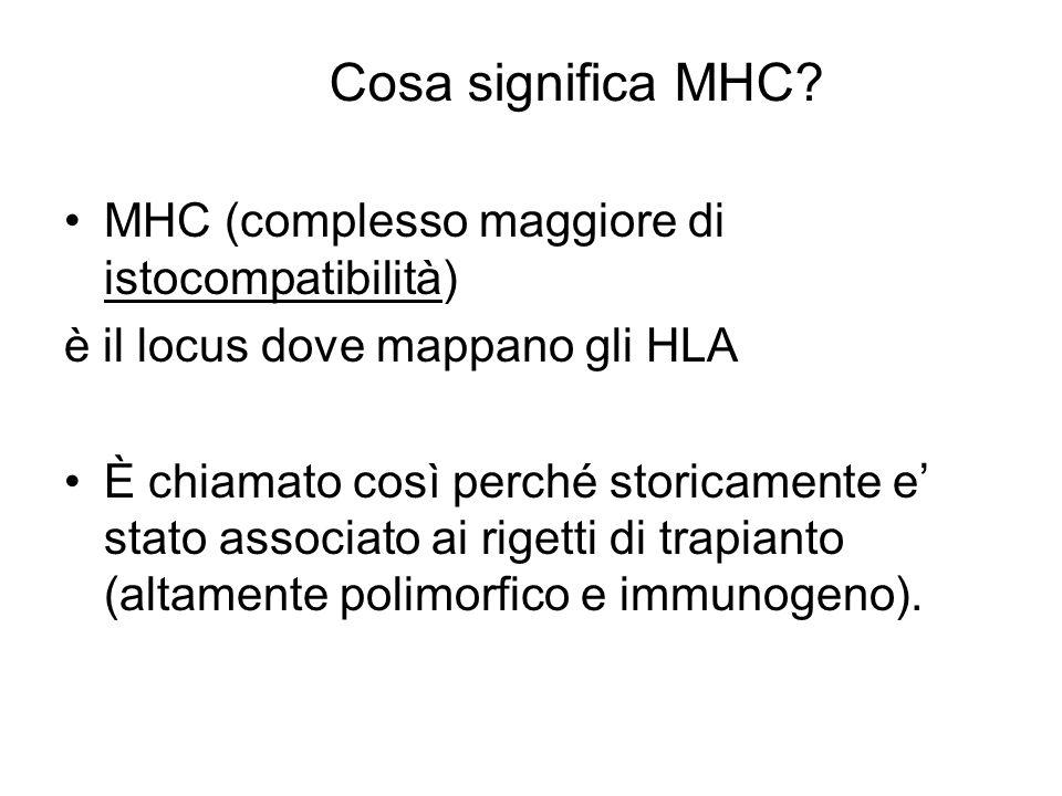 Cosa significa MHC MHC (complesso maggiore di istocompatibilità)