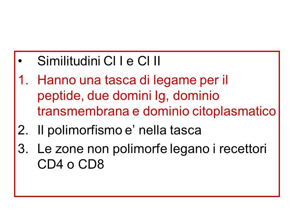 Similitudini Cl I e Cl II