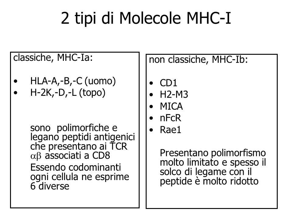 2 tipi di Molecole MHC-I classiche, MHC-Ia: non classiche, MHC-Ib: