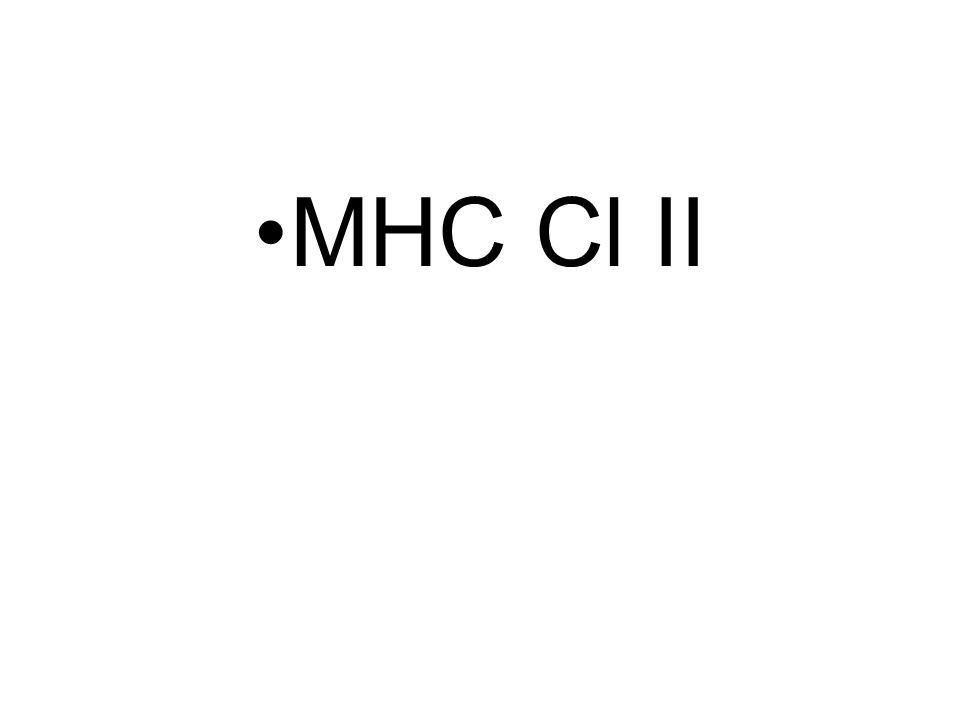 MHC Cl II