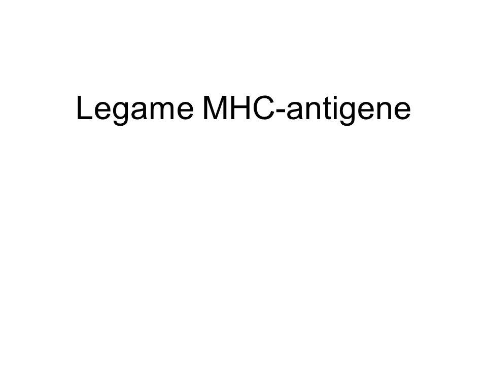 Legame MHC-antigene