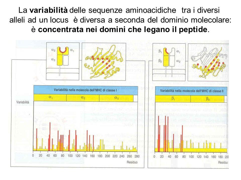 La variabilità delle sequenze aminoacidiche tra i diversi