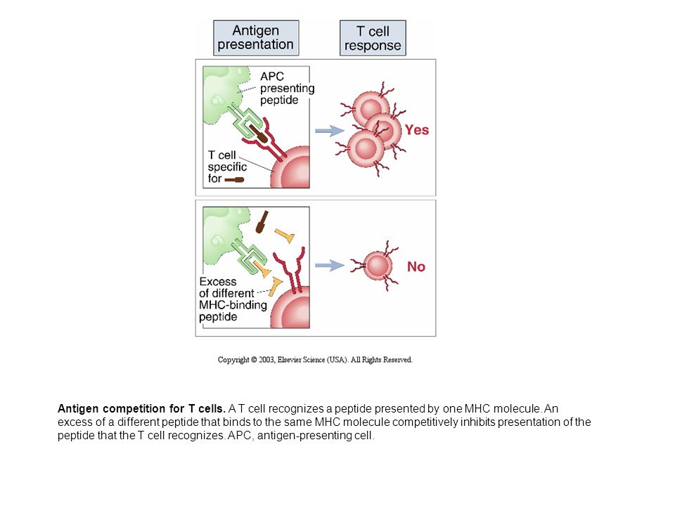 Antigen competition for T cells