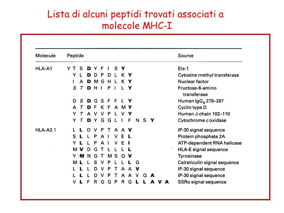Lista di alcuni peptidi trovati associati a