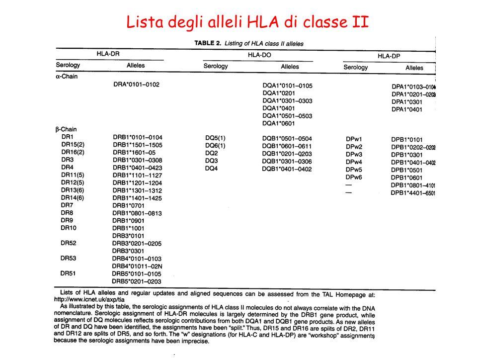 Lista degli alleli HLA di classe II